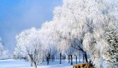 Beautiful ice rimes appear in NE China