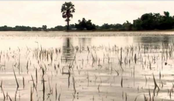 Sri Lanka's crops wiped-out by heavy rains