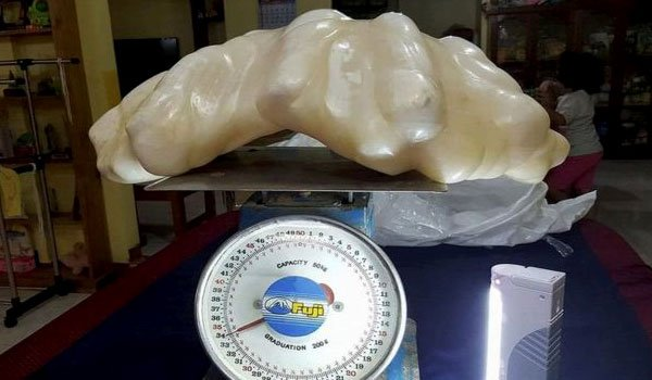 34kg pearl found in Philippines 'is world's biggest'