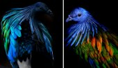 Dodo Bird's colourful relative
